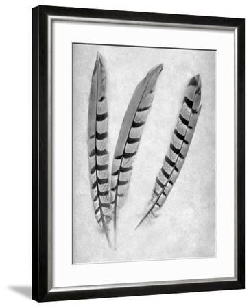 Feathers B-W #1-Alan Blaustein-Framed Photographic Print