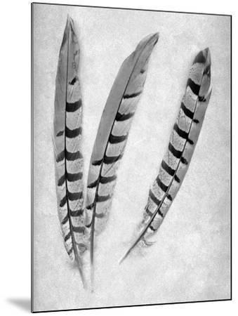 Feathers B-W #1-Alan Blaustein-Mounted Photographic Print
