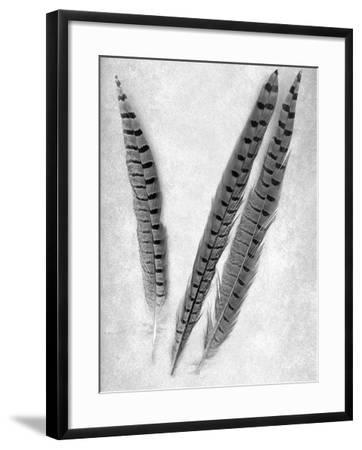 Feathers B-W #3-Alan Blaustein-Framed Photographic Print