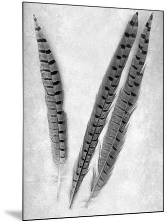 Feathers B-W #3-Alan Blaustein-Mounted Photographic Print