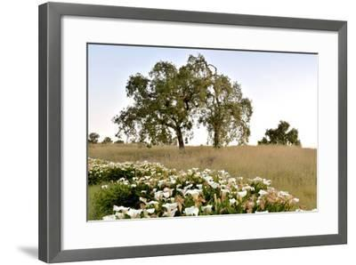 Oak Tree #94-Alan Blaustein-Framed Photographic Print