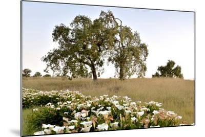 Oak Tree #94-Alan Blaustein-Mounted Photographic Print