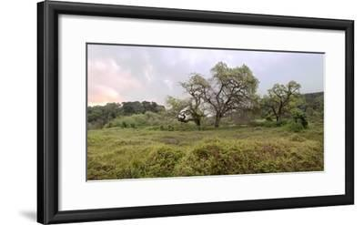 Oak Tree Pano #133-Alan Blaustein-Framed Photographic Print