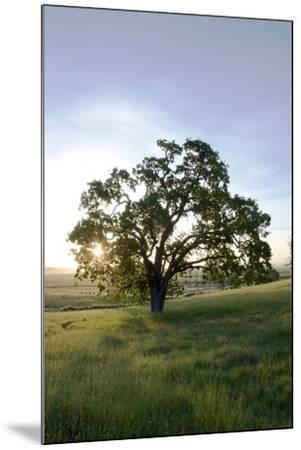 Oak Tree #95-Alan Blaustein-Mounted Photographic Print