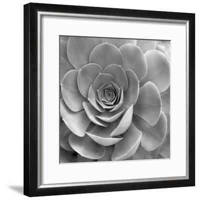 Floral #22-Alan Blaustein-Framed Photographic Print