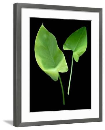 Floral Color #24-Alan Blaustein-Framed Photographic Print