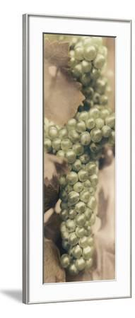 Chardonnay-Alan Blaustein-Framed Photographic Print