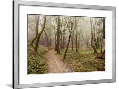 Oak Tree #21-Alan Blaustein-Framed Photographic Print