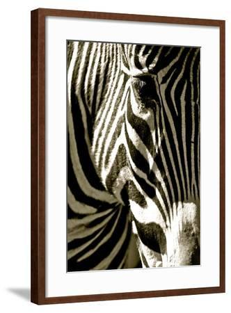 Zebra Head-Courtney Lawhorn-Framed Photographic Print