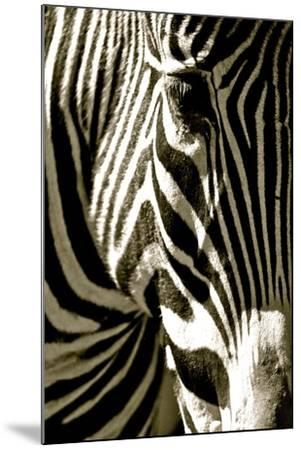 Zebra Head-Courtney Lawhorn-Mounted Photographic Print