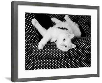 Birdie-Kim Levin-Framed Photographic Print