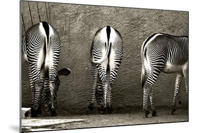 Zebra Butts-Courtney Lawhorn-Mounted Photographic Print