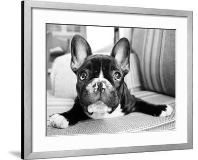 Hugo-Kim Levin-Framed Photographic Print