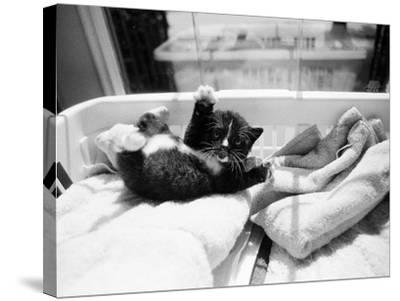 Kitten Laundry-Kim Levin-Stretched Canvas Print