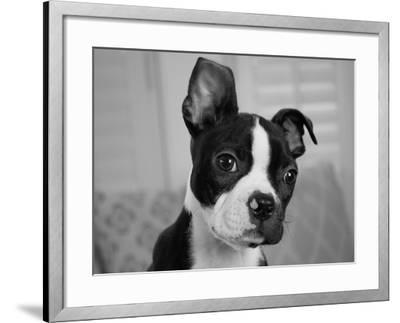 Hugo the Thinker-Kim Levin-Framed Photographic Print