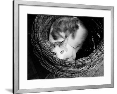 Picasso-Kim Levin-Framed Photographic Print