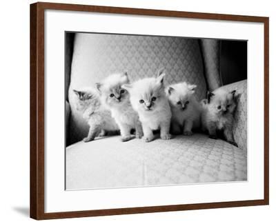 Five Kittens-Kim Levin-Framed Photographic Print