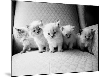 Five Kittens-Kim Levin-Mounted Photographic Print