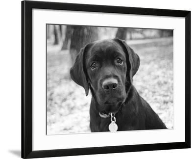 Zoey-Kim Levin-Framed Photographic Print