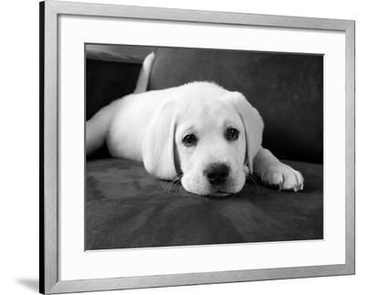 Finn-Kim Levin-Framed Photographic Print
