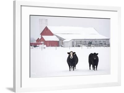 Cookies and Cream-Matthew Platz-Framed Photographic Print