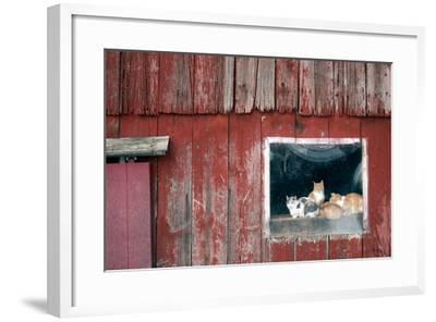 Family Portrait-Matthew Platz-Framed Photographic Print