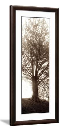 Hampton Gates Tree No.1-Alan Blaustein-Framed Photographic Print