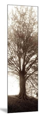 Hampton Gates Tree No.1-Alan Blaustein-Mounted Photographic Print