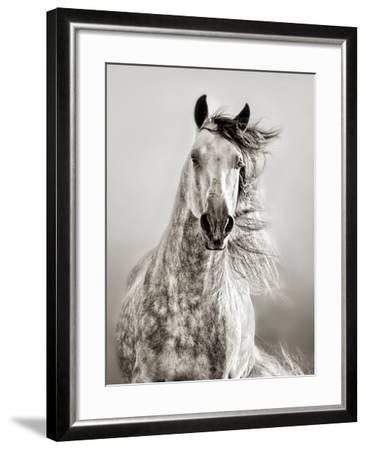 Caballo de Andaluz-Lisa Dearing-Framed Photographic Print