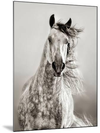Caballo de Andaluz-Lisa Dearing-Mounted Photographic Print