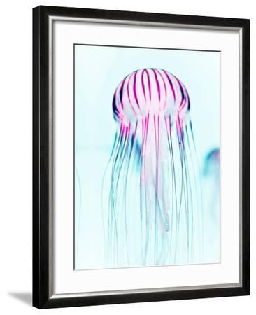 Jelly Fish-Tai Prints-Framed Photographic Print