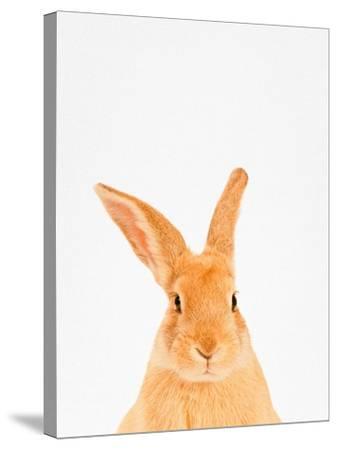 Rabbit-Tai Prints-Stretched Canvas Print