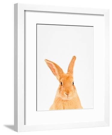 Rabbit-Tai Prints-Framed Photographic Print