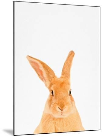 Rabbit-Tai Prints-Mounted Photographic Print