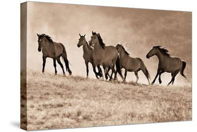 Kicking Dust-Lisa Dearing-Stretched Canvas Print