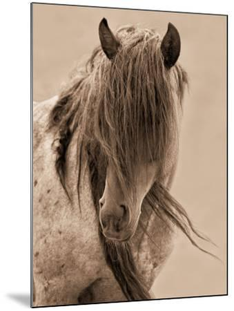 Freedom-Lisa Dearing-Mounted Photographic Print