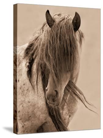 Freedom-Lisa Dearing-Stretched Canvas Print