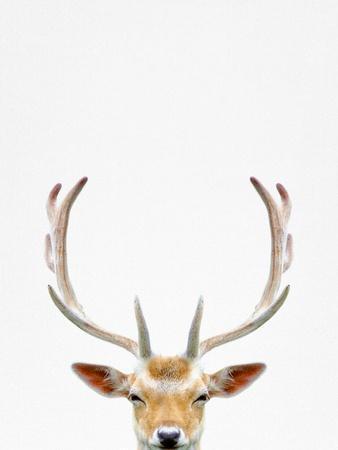 Deer-Tai Prints-Framed Photographic Print