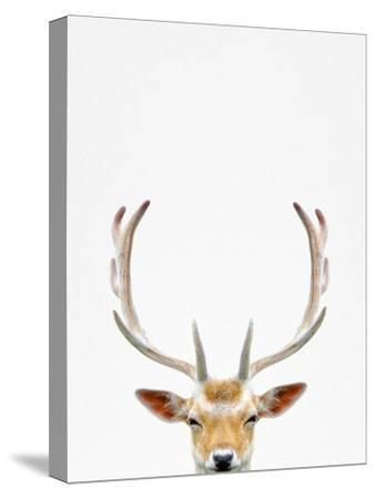 Deer-Tai Prints-Stretched Canvas Print