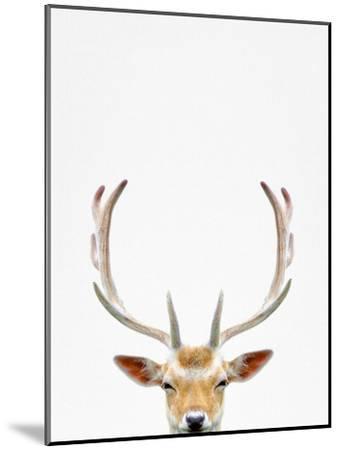 Deer-Tai Prints-Mounted Photographic Print