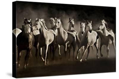 Dream Horses-Lisa Dearing-Stretched Canvas Print