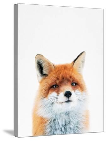 Fox-Tai Prints-Stretched Canvas Print