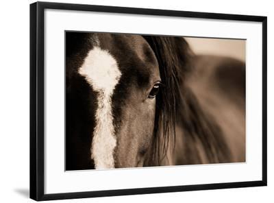 Dark Eyes-Lisa Dearing-Framed Photographic Print