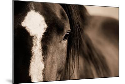 Dark Eyes-Lisa Dearing-Mounted Photographic Print