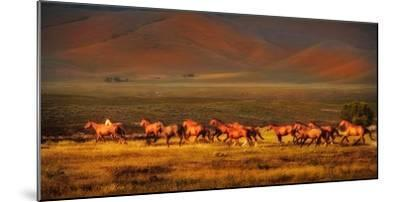 Montana Dreaming-Lisa Dearing-Mounted Photographic Print
