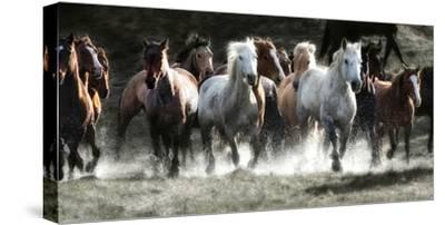 Renegades-Lisa Dearing-Stretched Canvas Print