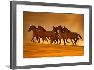 Night Runners-Lisa Dearing-Framed Photographic Print