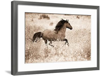 Running Free-Lisa Dearing-Framed Photographic Print