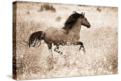 Running Free-Lisa Dearing-Stretched Canvas Print