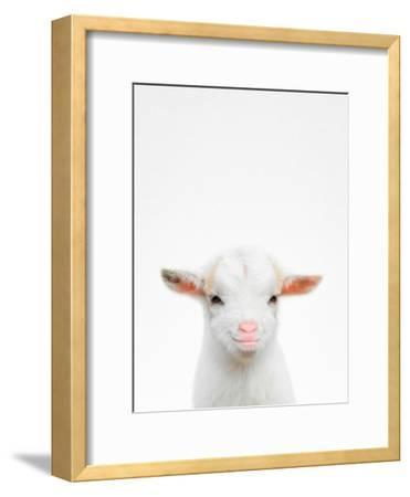 Baby Goat-Tai Prints-Framed Photographic Print